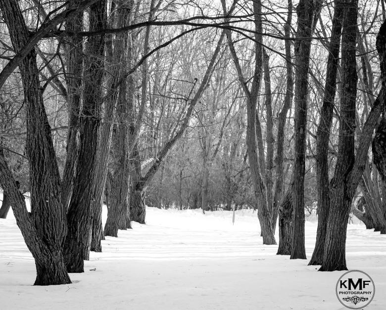 arboretum-21_watermark